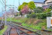 Railway with sakura tree — Stock Photo