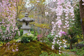 Japanese park with sakura tree — Stock Photo