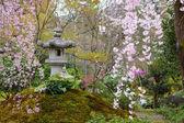 Japanese park with sakura tree — Stock Photo