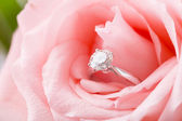 Pink Rose with diamond ring — 图库照片