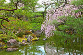 Japanese garden with sakura tree — Stock Photo