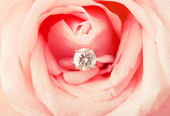 Engagement ring in pink rose — Stock Photo