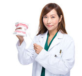 Dentist show with denture — Stock Photo