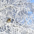 Winter. Hoarfrost. The sparrow sits on branches. — Stock Photo