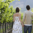 Couple Walking In Vineyard — Stock Photo