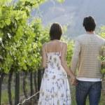 Couple Walking In Vineyard — Stock Photo #21787145