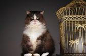 Cat Sitting Next To Birdcage — Fotografia Stock