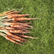 Stock Photo: Muddy Carrots On Grass