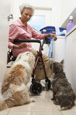 Woman With Pet Dogs By Washing Machine In Bathroom — ストック写真