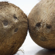 Two Coconuts — Stock Photo