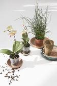 Растения комнатные цветы — Стоковое фото