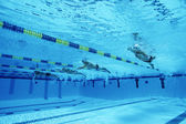 Swimmers Racing In Pool — Stock fotografie