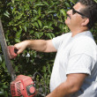 Man Cutting Garden Hedge — Stock Photo