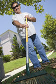 Man Raking Leaves In Lawn — Stock Photo