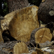 Chopped wood logs — Stok Fotoğraf #21876563