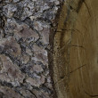 Extreme close-up view of tree bark — Stock Photo