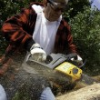 Stock Photo: Forestry worker cutting tree with chainsaw