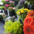 Fresh flowers at florist shop — Stock Photo
