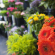 Stock Photo: Fresh flowers at florist shop
