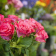 Bunch of fresh roses at flower shop — Stock Photo