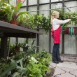 Stock Photo: Side view of senior florist spraying pesticide in greenhouse