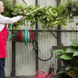 Side view of senior female gardener spraying pesticide on plants in garden center — Stock Photo