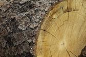 Close-up of chopped tree stump — Stock Photo