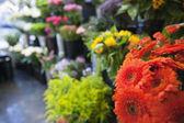Fresh flowers at florist shop — Stock Photo