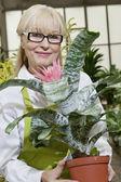 Portrait of a happy senior woman holding pot plant — Stock Photo