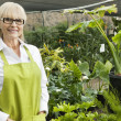 Portrait of a senior gardener in garden center — Stock Photo
