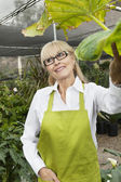Happy senior woman gardener standing in greenhouse while looking away — Stock Photo