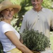 Senior Couple Gardening — Stock Photo