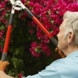 Man Pruning Flowers In Garden — Stock Photo