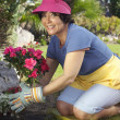 Woman Planting Flower Plant — Stock Photo