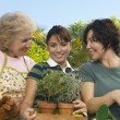 Female Holding Potted Plants With Mother And Grandmother - Stock Photo