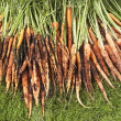 Freshly Picked Carrots On Lawn — Stock Photo #21948481
