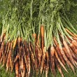 Stock Photo: Muddy Carrots On Lawn