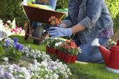 женщина, посадка цветов — Стоковое фото