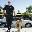 Stock Photo: Police Officer With Dog
