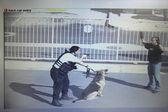 Guarda de segurança, apontando a arma para o ladrão no estacionamento — Fotografia Stock