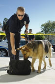 Police Dog Sniffing Bag — Stock Photo
