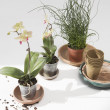 Potted Flower Plants — Stock Photo