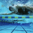 Stock Photo: Female Swimmers Swimming
