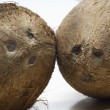 Two Coconuts - 
