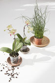 Potted Plants With Dirt — Stock Photo