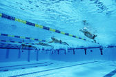 Schwimmer racing im pool — Stockfoto