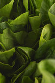 Lechuga verde fresca — Foto de Stock
