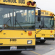 Parked School Buses — Stock Photo