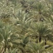 Palm Trees In Abundance — Foto de Stock