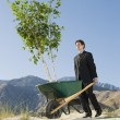 Stock Photo: BusinessmPushing Wheelbarrow And Tree in Desert